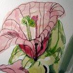 Schlüsselblume - Zeichnung von Susanne Haun - 17 x 22 cm - Aquarell und Tusche auf Bütten