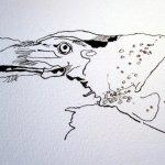 Entstehung Flusskrebs - Zeichnung von Susanne Haun
