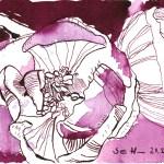 Bordeaux Anemone - Tusche auf Bütten - 10 x 15 cm - Zeichnung von Susanne Haun