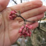 Draußen finde ich auch ein wenig Frühling an de n Sträuchern - Foto von Susanne Haun