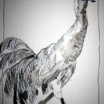 Kranich - Zeichnung von Susanne Haun - 30 x 20 cm - Tusche auf Bütten