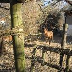 Jeden Morgen komme ich an der Pferdekoppel vorbei - Foto von Susanne Haun