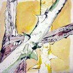 Rosenstöcke in gelb - Zeichnung von Susanne Haun - 25 x 25 cm - Tusche auf Bütten