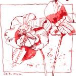 Fette Henne - Zeichnung von Susanne Haun - 20 x 20 cm - Tusche auf Bütten