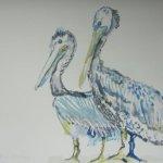 Pelikane - Aquarell von Susanne Haun - 40 x 60 cm