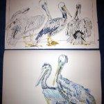 Vergleich Pelikane Bild 1 und Bild 2 von Susanne Haun