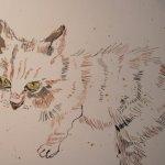 Katzen haben grüne Augen - - Entstehung Zeichnung von Susanne Haun