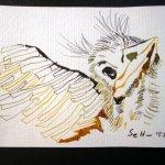 Amsel 1 - Zeichnung von Susanne Haun - 10 x 15 cm - Tusche auf Hahnemühle Bütten