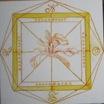 Windrose gelb - Schwertlilie - Zeichnung von Susanne Haun - 25 x 25 cm - Tusche auf Bütten