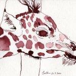 Giraffenbaby Vers 1 - Zeichnung von Susanne Haun - 17 x 22 cm - Tusche auf Hahnemühle Aquarellkarton Burgund