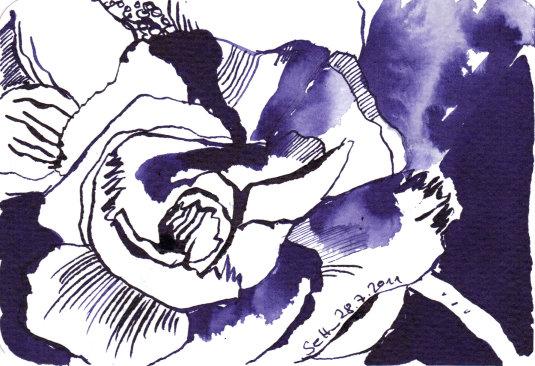 Lila Nelke - Zeichnung von Susanne Haun - 10 x 15 cm - Tusche auf Bütten