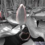 Seerosen Vers 2 - Foto von Susanne Haun