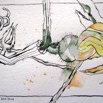 Kürbisblüte - Zeichnung von Susanne Haun - Tusche auf Bütten - 17 x 22 cm