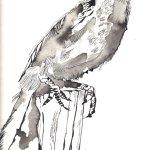 Ausschnitt Krähe - Zeichnung von Susanne Haun