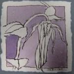 Blüte 1 lila koloriert - Zeichnung von Susanne Haun - Tusche auf Bütten - 10 x 10 cm