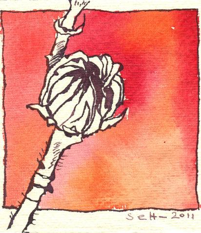 Hibiskus Vers. 1 - Zeichnung von Susanne Haun - Tusche auf Silberburg - 10 x 10 cm