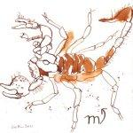 Skorpion - Zeichnung von Susanne Haun - Tusche auf Bütten - 20 x 20 cm