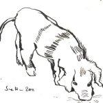 Hausferkel - Zeichnung von Susanne Haun - 17 x 12 cm - Tusche auf Bütten