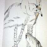 Ende der Zeichnung Flamingo von Susanne Haun ( 200 x 40 cm )