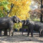 Elefantentanz im Berliner Zoo - Foto von Susanne Haun