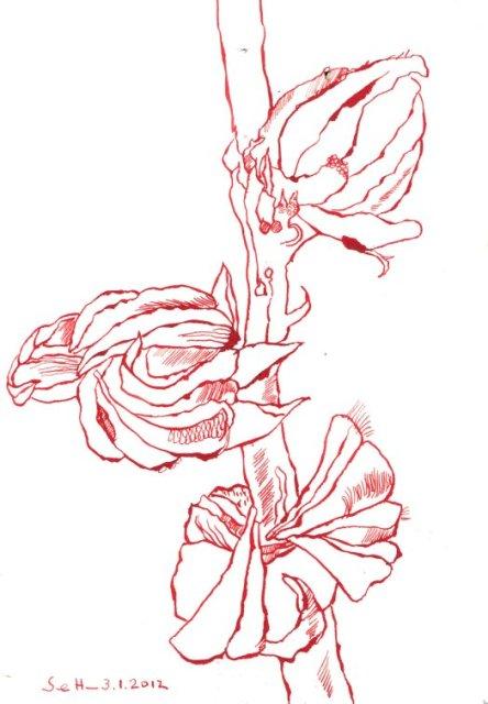 Hibiskus - Zeichnung von Susanne Haun - Tusche auf Lanaquarelle - 18 x 26 cm