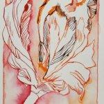 Entstehung Tulpe (c) Zeichnung von Susanne Haun (2)