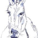 Esel (c) Zeichnung von Susanne Haun