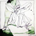 Ornithogalum,30 x 30 cm, Version 1 (c) Zeichnung von Susanne Haun