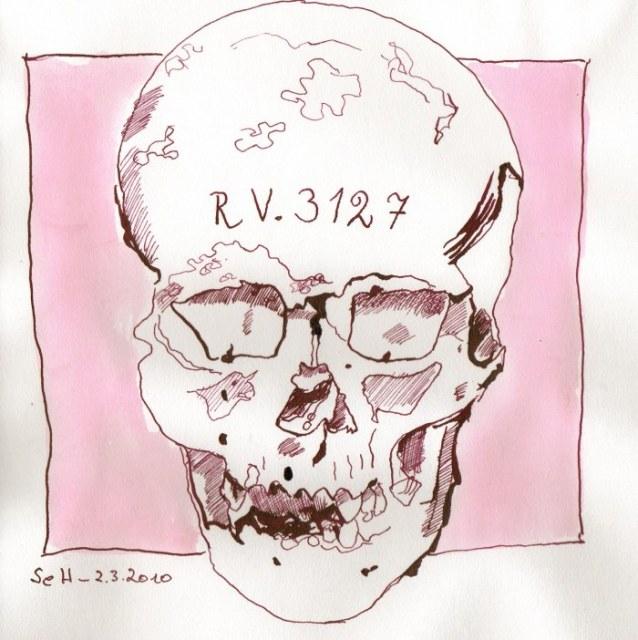 Vanitas Stilleben Totenkopf Frontal (c) Zeichnung von Susanne Haun