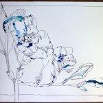 Fresie Tusche auf Bütten 60 x 80 cm (c) Foto und Zeichnung von Susanne Haun