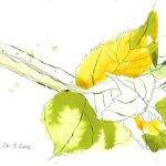 Erstes Grün - Tusche auf Bütten - 17 x 22 cm - Version 4 (c) Zeichnung von Susanne Haun