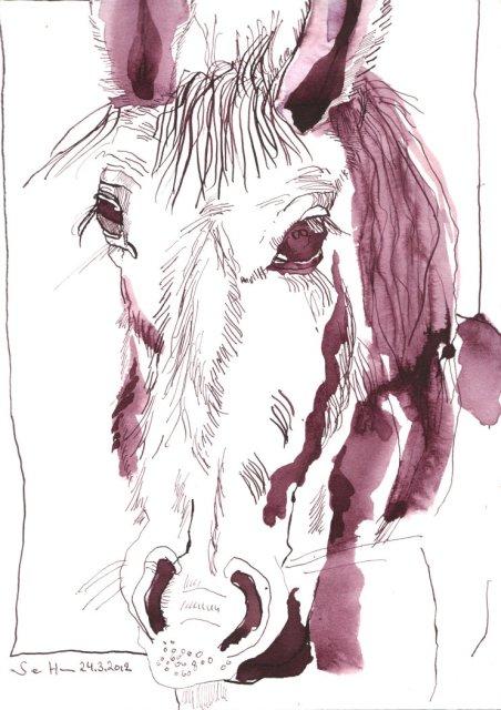 Pferd Version 2 Tusche auf Bütten 34 x 22 cm (c) Zeichnung von Susanne Haun