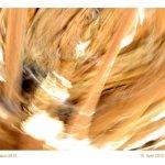 o.T. 10.April2012 Version 1 (c) Foto von Susanne Haun