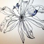 Verblühte Magnolien Detail 30 x 40 cm Tusche auf Bütten (c) Zeichnung von Susanne Haun (2)