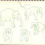 Elefanten (c) Skizze von Susanne Haun