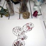 Entstehung Mohn (c) Zeichnung von Susanne Haun