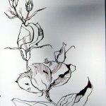 Pink Blüte , 17 x 22 cm, Tusche auf Bütten (c) Zeichnung von Susanne Haun