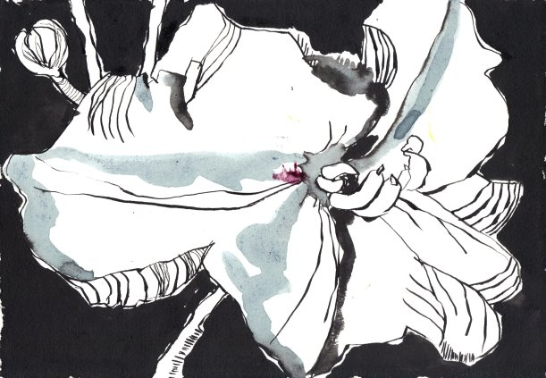 Tulpe 17 x 22 cm Tusche auf Bütten (c) Susanne Haun