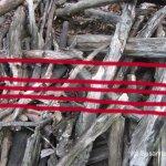 Wald Version 1 (c) Foto von Susanne Haun