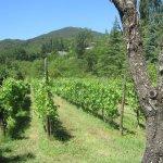 Vom Montone aus in die Weinfelder (c) Foto von Susanne Haun