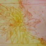 Dahlie Nr. 3 Strichätzung 15 x 20 cm (c) Radierung von Susanne Haun