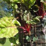 Projekte nachhaltiger Landwirtschaft von Claire Pentecost