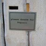 Araya Rasdjarmrearnsook sammelt Spenden für die Hunde