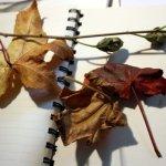 Ich Habe den Herbst mitgenommen (c) Foto von Susanne Haun