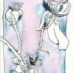 Verblühte Rose Version 1 (c) Zeichnung von Susanne Haun