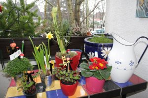 Neujahrsblumen (c) Foto von Susanne Haun