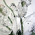 Tulpen (c) Zeichnung von Susanne Haun