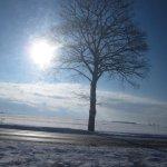 Einsame Bäume (c) Foto von Susanne Haun