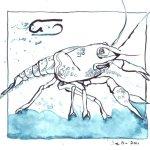 4 Krebs (c) Zeichnung von Susanne Haun