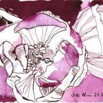 Himbeerblüte (c) Zeichnung von Susanne Haun